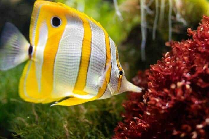 frases de amor cortas-Te quiero más que los peces al agua.