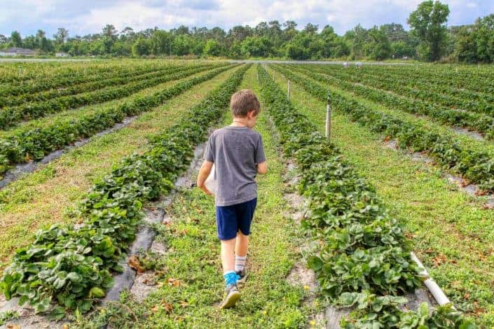 niño en camisa gris caminando sobre el campo de hierba verde
