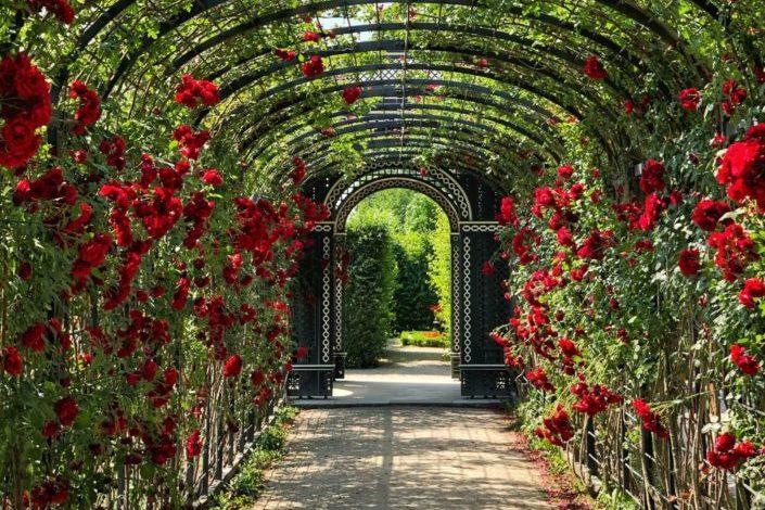Si mi amor por ti fuera una flor, podría caminar en este jardín por siempre...